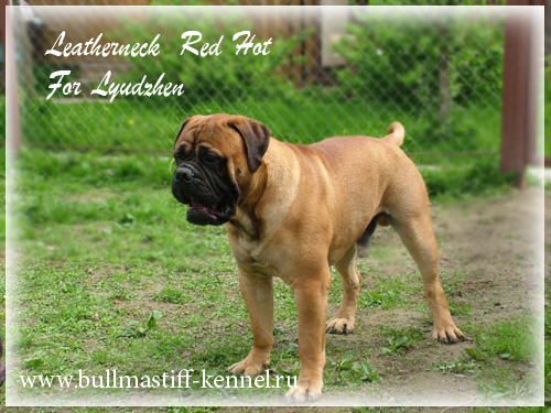 LEATHERNECK RED HOT FOR LYUDZHEN